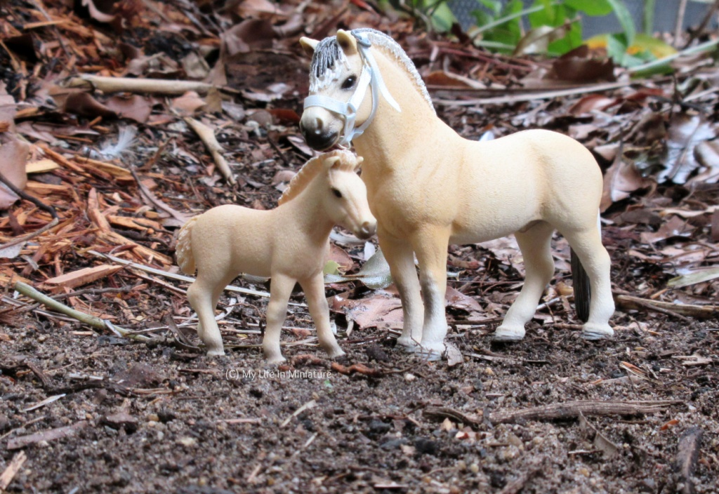 Two model Fjord horses (a stallion with a pale blue halter and a foal) stand on a 3/4 angle to the camera. They are outside on dirt, and behind them is leaf litter, mulch, and some plants in the distance.